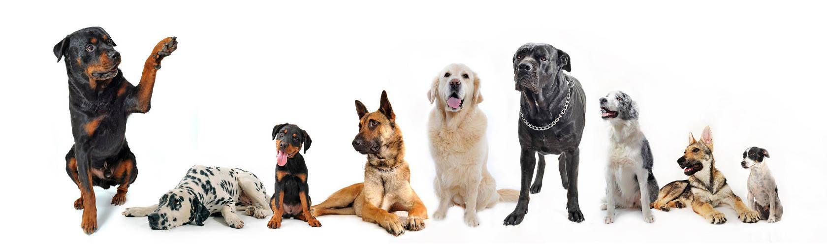 Honden Trimsalon de Markol te Lemmer